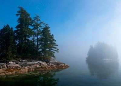 Foggy morning in the Burdwoods
