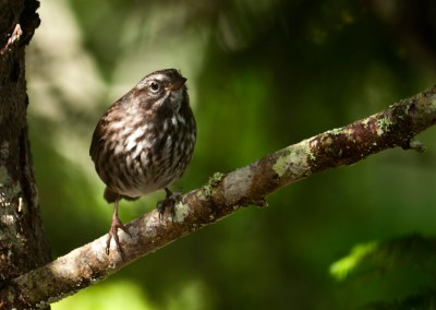 There are many species of birds throughout the Broughton.
