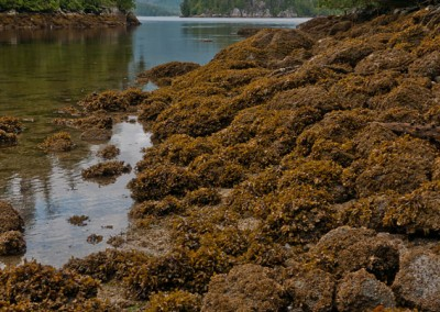 Low tide in Scott Cove